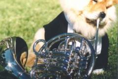 horn_player